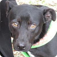 Adopt A Pet :: CJ! 24 Pounds! - St Petersburg, FL