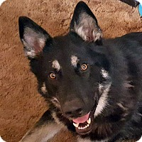 Adopt A Pet :: KODA-Adoption Pending - Boise, ID