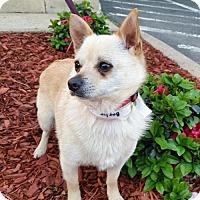 Adopt A Pet :: Baylor - Arlington, VA