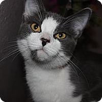 Adopt A Pet :: Abby - Tampa, FL