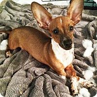 Adopt A Pet :: HENRY - Portland, OR