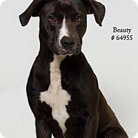 Adopt A Pet :: Beauty - Baton Rouge, LA