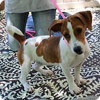 Adopt A Pet :: Susie - Locust Fork, AL
