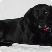 Adopt A Pet :: Eve - Elyria, OH