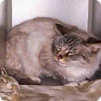 Adopt A Pet :: *VELVET - Jackson, CA