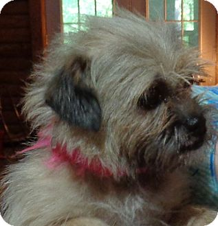 Terrier (Unknown Type, Small) Mix Dog for adoption in Crump, Tennessee - Alice