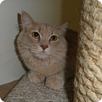 Adopt A Pet :: Furosha - Milwaukee, WI