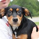 Adopt A Pet :: Sundance
