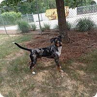 Adopt A Pet :: dillinger - Gadsden, AL