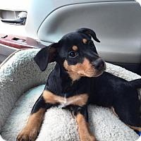 Adopt A Pet :: Senna - Alpharetta, GA