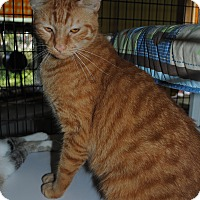 Adopt A Pet :: Sebastian - Bay City, MI