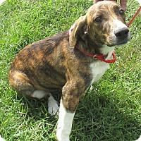 Adopt A Pet :: Lavern - Reeds Spring, MO