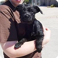 Adopt A Pet :: Lionel - Lathrop, CA