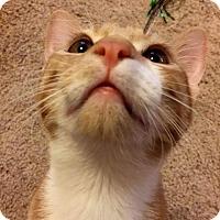 Adopt A Pet :: Lucky Luciano - Edmond, OK