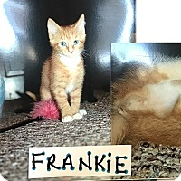 Adopt A Pet :: Frankie - Island Park, NY
