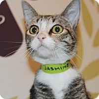 Adopt A Pet :: Jasmine - Agoura Hills, CA