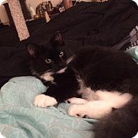 Adopt A Pet :: Willow - Richmond, VA