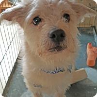 Adopt A Pet :: Jango - Mt. Prospect, IL