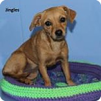 Adopt A Pet :: Jingles - Madisonville, TN