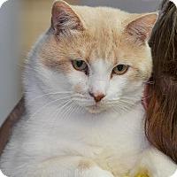 Adopt A Pet :: Fonz - Ottumwa, IA