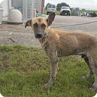 Adopt A Pet :: SARGENT - Rosenberg, TX