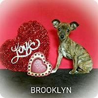 Adopt A Pet :: Brooklyn - Troutville, VA