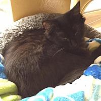 Adopt A Pet :: Nicole - Arlington/Ft Worth, TX