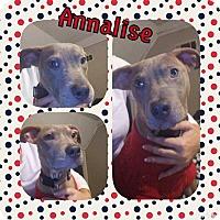 Adopt A Pet :: Analise - Covington, TN
