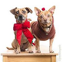Adopt A Pet :: Lita & Lata - San Diego, CA