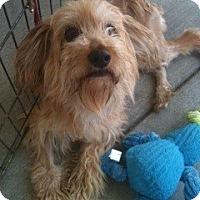 Adopt A Pet :: Lucia - Santa Monica, CA