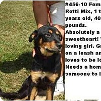 Adopt A Pet :: # 456-10 - ADOPTED! - Zanesville, OH