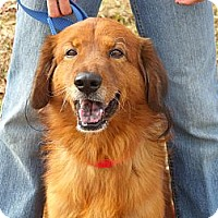 Adopt A Pet :: Rusty - Fort Valley, GA