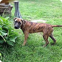Adopt A Pet :: Meara - Alexandria, VA
