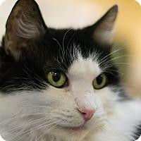 Adopt A Pet :: Balkan - Grayslake, IL