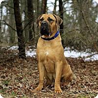 Adopt A Pet :: Buddah-MD - Virginia Beach, VA