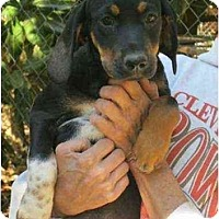 Adopt A Pet :: Shelby - Lincolndale, NY