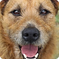 Adopt A Pet :: Kati - Pinehurst, NC