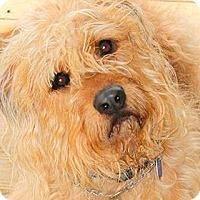 Adopt A Pet :: CISCO(OUR