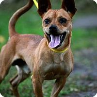 Adopt A Pet :: Ferguson - Miami, FL