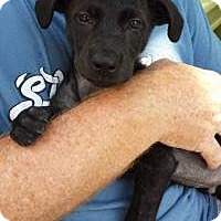 Adopt A Pet :: Jack - Marlton, NJ