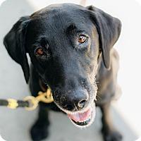 Adopt A Pet :: Along Came Elliot - Los Angeles, CA