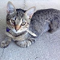 Adopt A Pet :: Jellie - Oviedo, FL