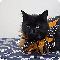 Adopt A Pet :: Batman - Sterling, KS