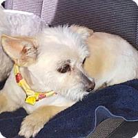 Adopt A Pet :: Coco - Odessa, TX