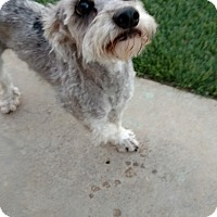 Adopt A Pet :: Fenway - San Diego, CA