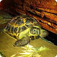 Adopt A Pet :: Speedy - Burlingame, CA