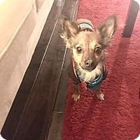 Adopt A Pet :: Zuma-Jay - Los Angeles, CA