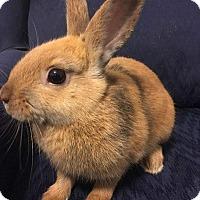 Adopt A Pet :: Melody - Hillside, NJ