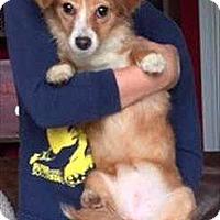 Adopt A Pet :: Lady - Encino, CA