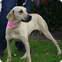 Adopt A Pet :: Britts -39 lbs - Warwick, NY